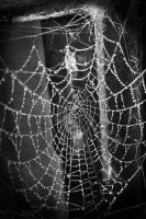 Web by HelianthusMay