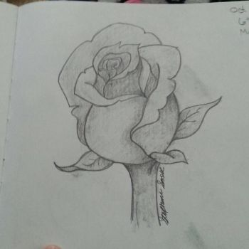 Rose by Stephie212202