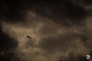 Flying in the storm by sylvaincollet
