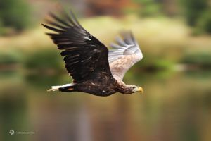 Fly like an Eagle... by RadekDemjan