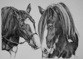 Two horses by FanDante