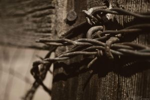 Barbed Wire by pixelpengin