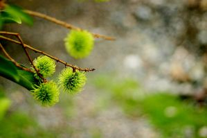 green and fuzzy by jamesvaughnn