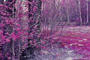 Purple forest by CountessAudronasha
