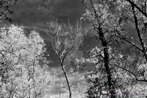 Just trees... by sweetz76
