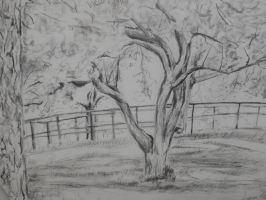 landscape drawing cw 3 by LullaNonseSong