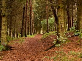 Woods In Early Autumn II by DundeePhotographics