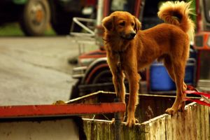 A DOG WHO CLIMBS HIS HOUSE by redox2252