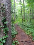 Appalacian Trail To Chimney Rocks 03 by TemariAtaje