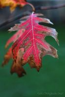 Autumn Leaf by Nolamom3507