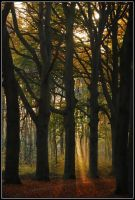In the autumnal morning-forest by jchanders