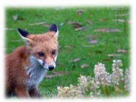 one of this years cubs by awjay