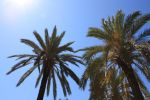 Summer Palm Trees 1 by photohouse