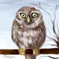 Little Owl by TigaLioness