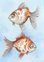 Two Ryukin Goldfish ACEO by c-urchin