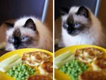 My dinner and cat by eugene-dune