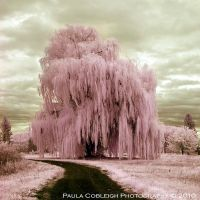 Infrared Pink SillyString Tree by La-Vita-a-Bella