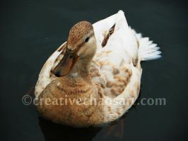 Mother Duck II by bicyclegasoline