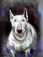 English Bull Terrier by astarvinartist