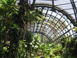 Forest Skylights by Duckweed