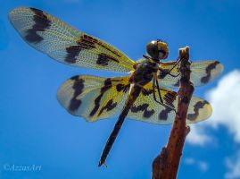 Dragonfly by AzzasArt