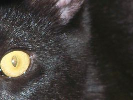 eye of the domestic cat by Computer-Turret