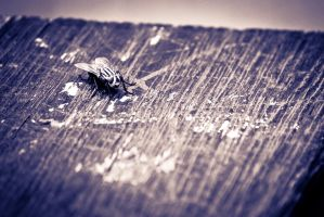 hipster fly is bench warming by traianvh