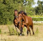Frolicking Colts by Deirdre-T