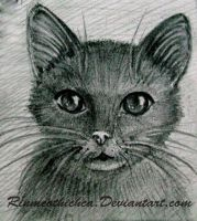 Draw a cat by Rinmeothichca