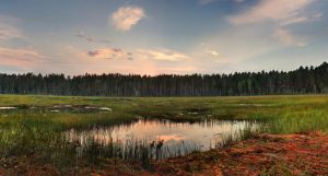 Beauty of the bog by DeingeL