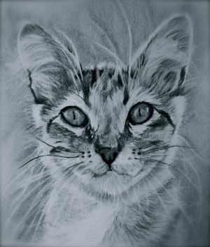 Charcoal Cat by ShanghaiSarah