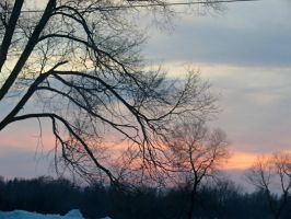Branches at Sunset by Michies-Photographyy