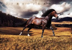 Stradivarius by adverbial-spectra