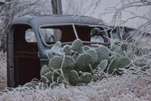 Cactus Ice and Pick Up Truck by Sherjaxon