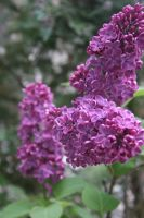 view to lilac 2 by ingeline-art