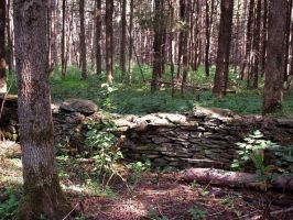 Forest Stock 4: Old Wall by HOTNStock