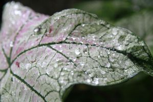 The leaf with dew this morning by ChanelStudio