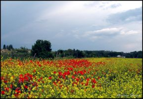 Colorful Countryside Field by mslusar