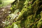 Moss Forest by Jcat225