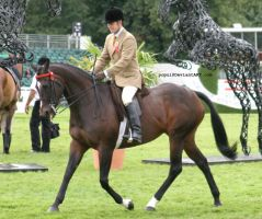 Bay horse showing by popui