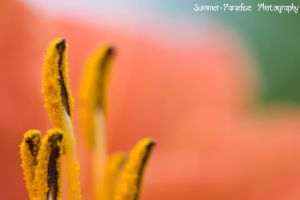 Colors by Summer-Paradise