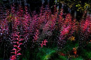 Red Weed 4 by PhilipWebb