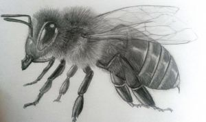 Bee by LauriieT