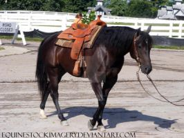 Quarter Horse 55 by EquineStockImagery