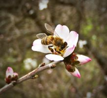 flower and bee by lisans