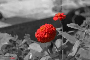 RED by sharjah3000