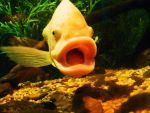 The happyest fish alive. by Iffoundfacedown