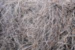 The texture of the hay by Tumana-stock