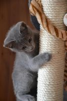 hold on little cat by Peggsi