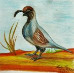 Gambel's Quail by SpiderMilkshake